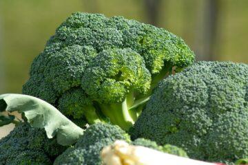 Все о брокколи: состав, польза и как его приготовить